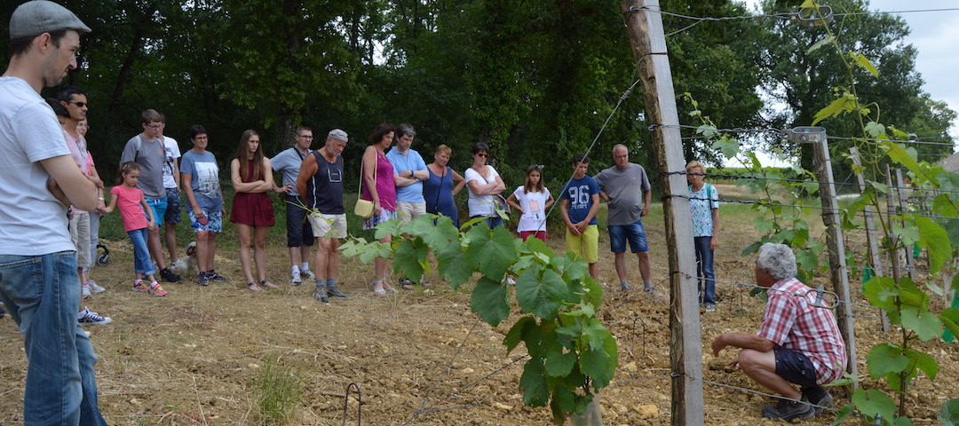 Visite guidée dans les vignes de notre vignoble - vins AOC Bergerac - Tourisme et Oenotourisme