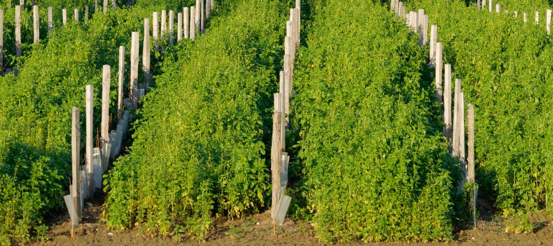 L'agro-écologie sur le vignoble du Domaine du Siorac