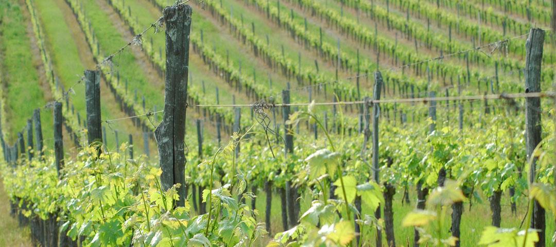 Paysage de printemps du vignoble du Domaine du Siorac au sud de Bergerac