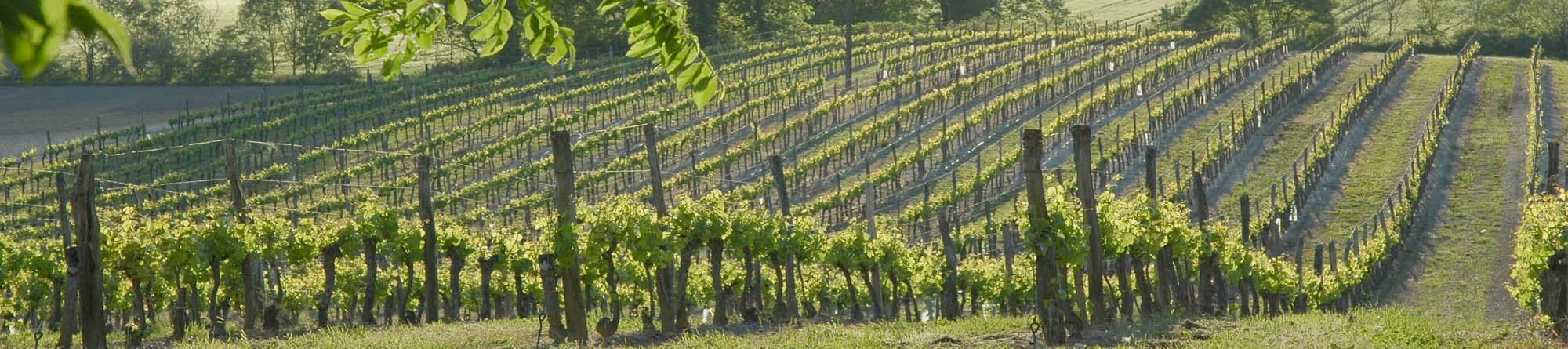 Vigneron, créateur de paysage