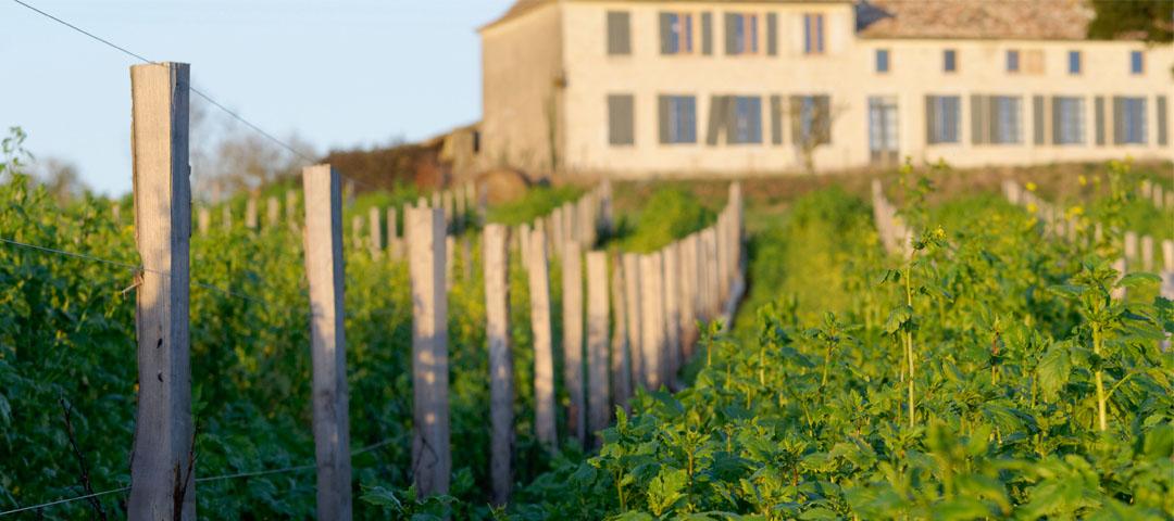 La conduite du vignoble du Domaine du Siorac avec des engrais biologiques