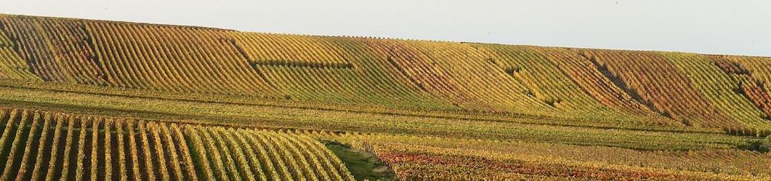 Foire aux Vins de Mailly - Vins AOC Bergerac - Domaine du Siorac