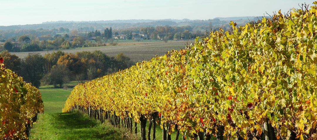 Paysage d'automne au vignoble du Domaine du Siorac au sud de Bergerac