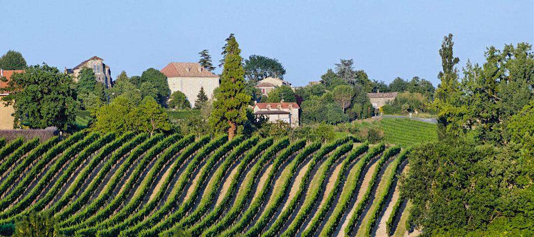 Paysage d'été du vignoble du Domaine du Siorac au sud de Bergerac