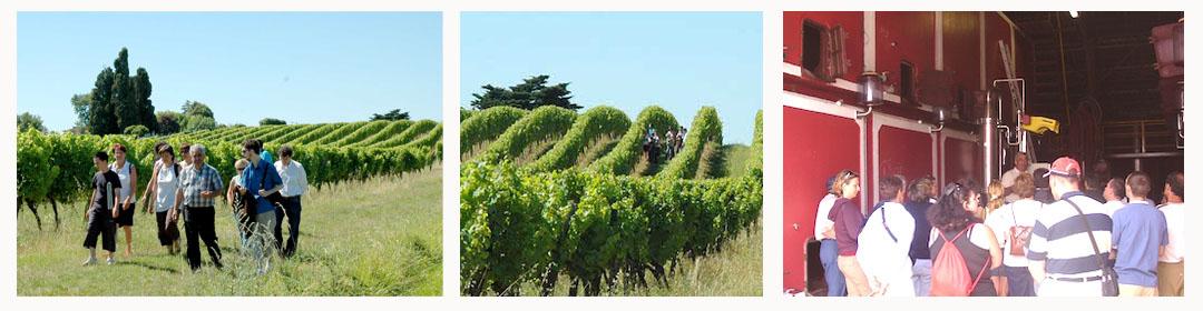 Visite guidée et commentée du vignoble du Domaine du Siorac en AOC Bergerac