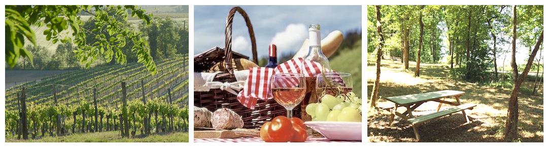 Pique Nique Vigneron dans le vignoble de Bergerac