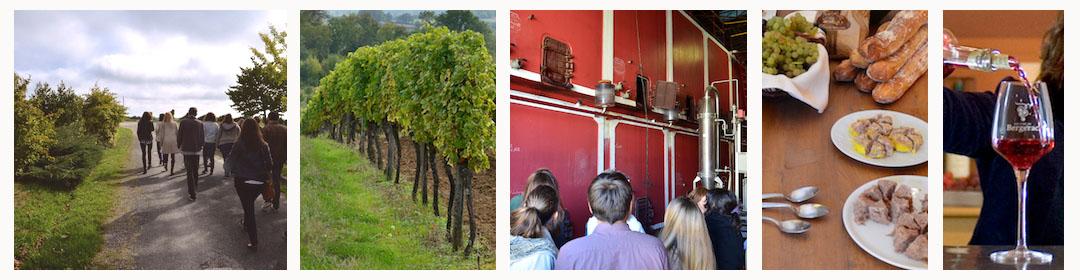 Visite du vignoble, des chais, dégustation et pique-nique au vignoble du Domaine du Siorac