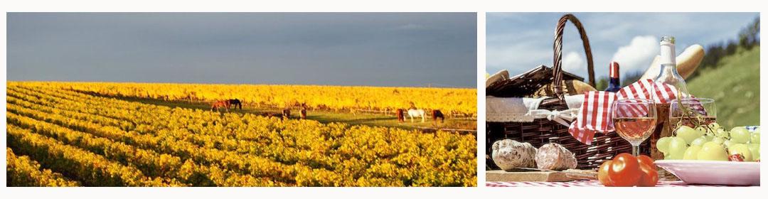Balade à cheval et pique-nique au vignoble du Domaine du Siorac