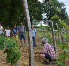 Visite guidée du vignoble du Domaine du Siorac au sud de Bergerac