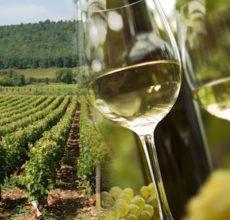 Découvrez les vins AOC bergerac à la Foire aux vins de Mailly